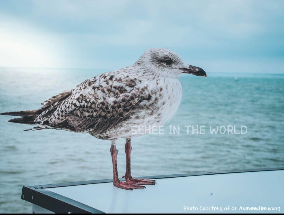 Seagull, Brighton Beach, Brighton