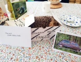 Birthday Card & Gift to Visiting Cambridge Shepreth Hedgehog Hospital - Sehee in the World