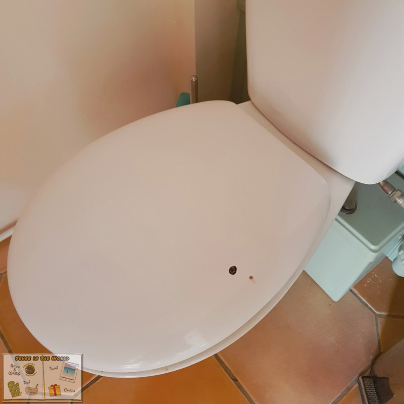 European robin's mess on the toilet cover in the house - photo taken by me, Sehee in the World