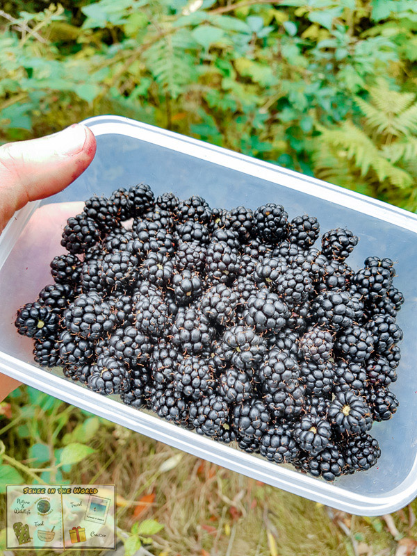 Wild blackberries picked and kept in a container - photo taken by me, Sehee in the World