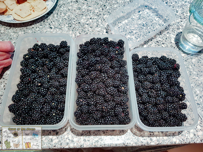 3 full containers of wild blackberries - photo taken by me, Sehee in the World