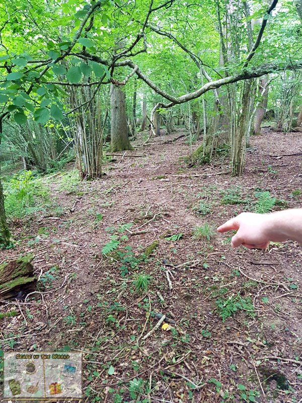 Finding evidence of badgers in the UK - badgers leave clear paths because their body is low to the ground as they walk - they are one of the UK's largest land mammals after all. - Photo taken by me, Sehee in the World