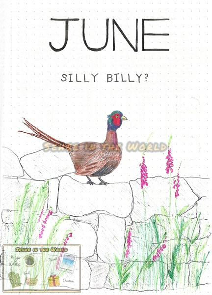 Bullet journal cover ideas for wildlife lovers - my June page design: pheasant, drawn by. Sehee in the World