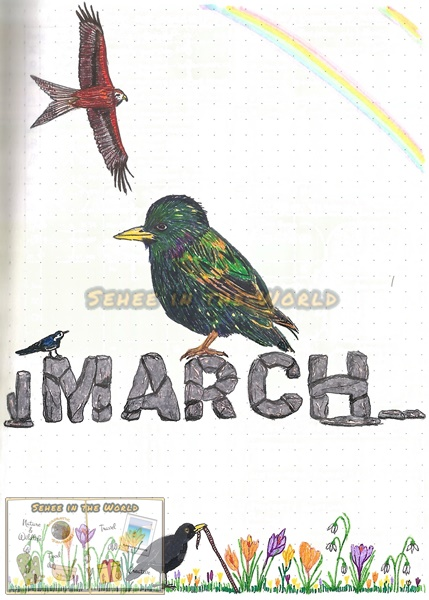 Bullet journal cover ideas for wildlife lovers - my March page design: redkite, starling, pied wagtail, blackbird, crocus, Stonehenge style text, drawn by. Sehee in the World