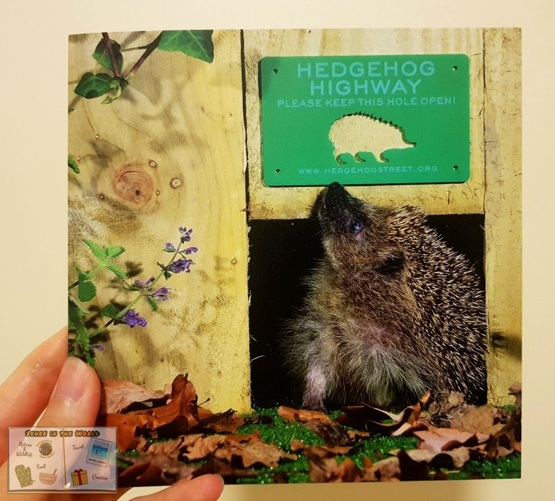 A pretty card whose cover is a photo of a hedgehog looking up the Hedgehog Highway sign - Sehee in the World